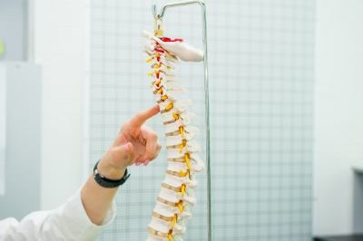 Closeup on medical doctor woman pointing on spine model